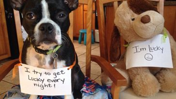 This Frisky Pup Needs A Girlfriend-dogshaming-01